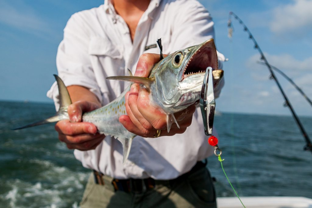 An angler in a white shirt on a boat holding a Spanish Mackerel