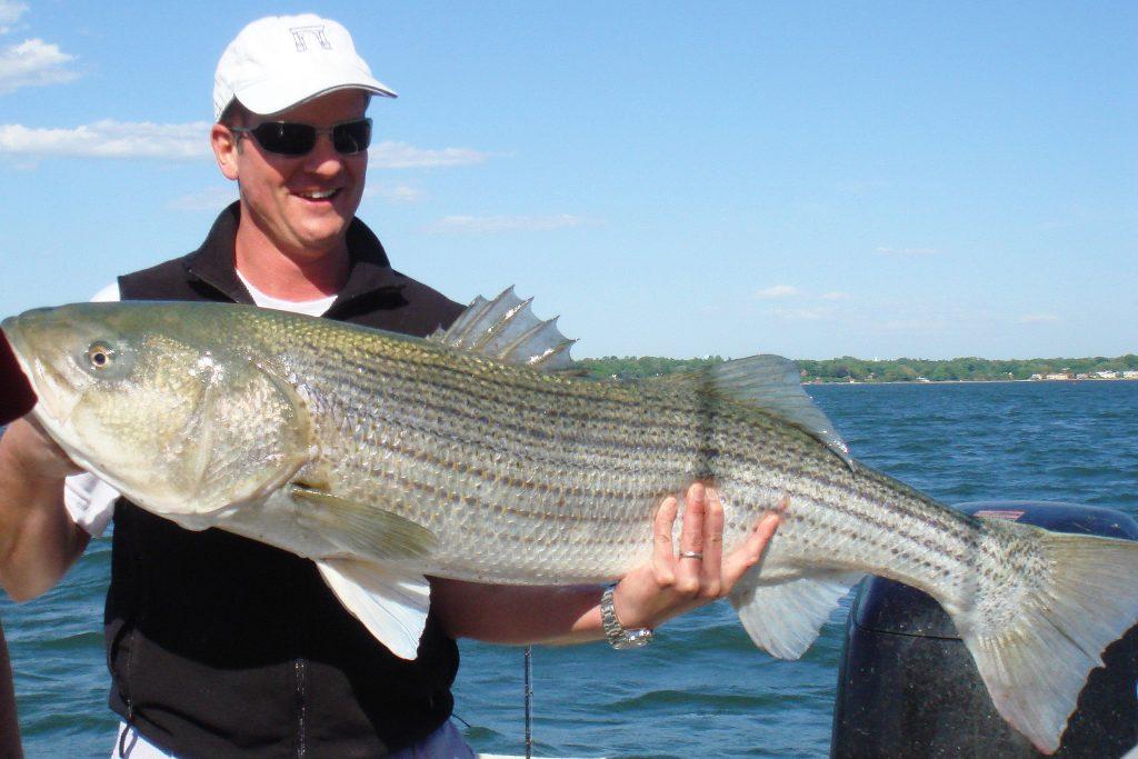 man holding striped bass on the sacramento river