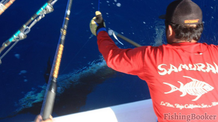 This Striped Marlin lived to fight another day (Read report)