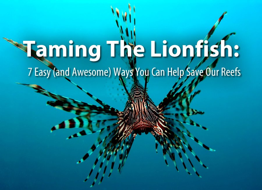 """An image of an invasive Lionfish with the text """"Taming the Lionfish: 7 easy (and awesome) ways you can help save our reefs""""  in white"""