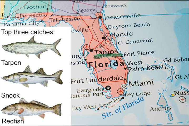 Florida map showing Tampa and three top fish species to target there: Tarpon, Snook, and Redfish