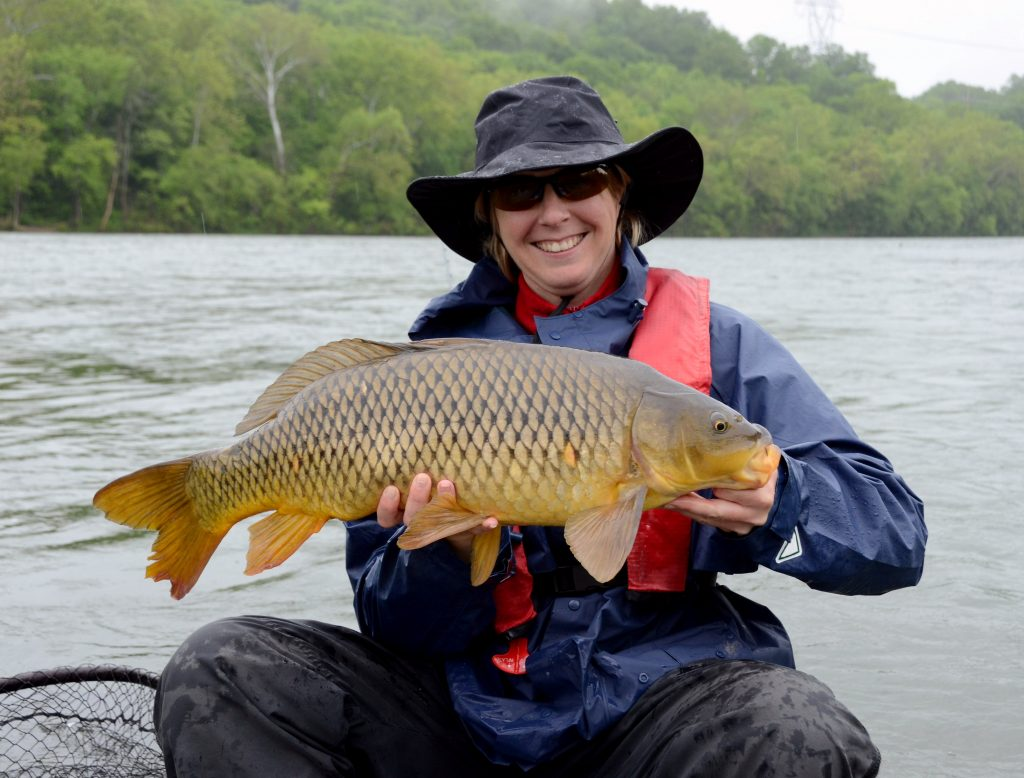 A large bronze common carp fish being held horizontally by a smiling women in rain gear in the falling rain on a wet spring day